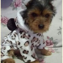 Warm winter Yorkie dress / pajamas / hoodie
