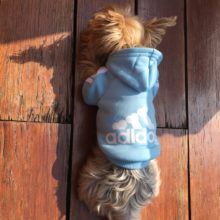 Warm, fashionable Adidog (Adidas) hooded sweatshirt