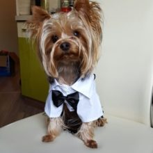 Western Style Dog Suit with Bow / Tie