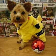 Cute Pikachu / Pokemon coat / hooded sweatshirt / costume