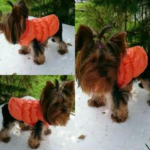 Winter padded warm vest / coat in 7 colors