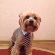 Adjustable, trendy Dog Ties