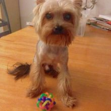 Colorful, pretty Dog Toy Ball