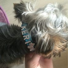 Personalized Dog Collar With Rhinestone Buckle