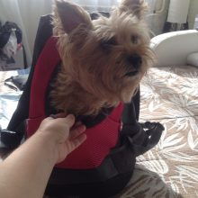 Convenient, portable dog Carrier / Backpack