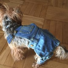 Absolutely lovely Yorkie Jean overalls outfit