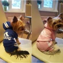 "Absolutely lovely ""Adidog"" (Adidas) sports yorkie outfit"