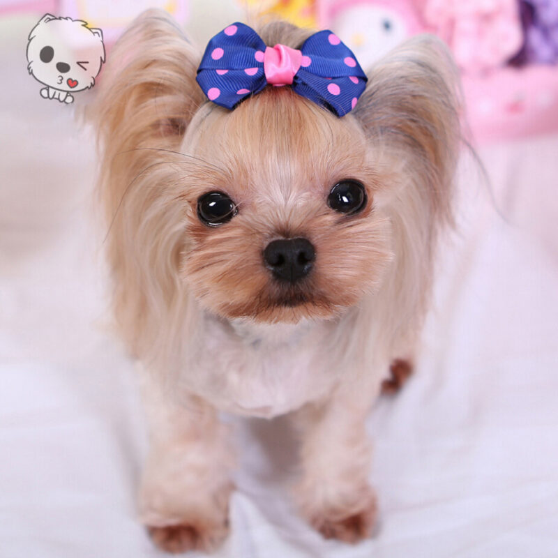3pcs Of Lovely Yorkie Hair Bows Pins