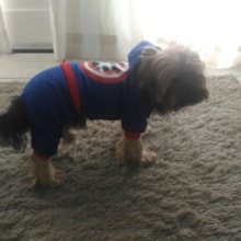 """Fashionable Winter """"Captain America"""" Hooded Yorkie"""