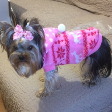 Warm Yorkie sweater, perfect for winter