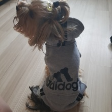 """Absolutely lovely """"Adidog"""" (Adidas) sports yorkie outfit"""