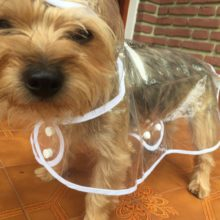 Waterproof Yorkie Raincoat